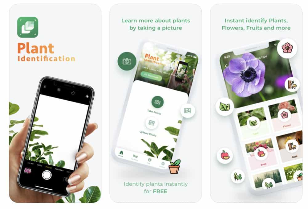 LeafSnap-Plant Identification